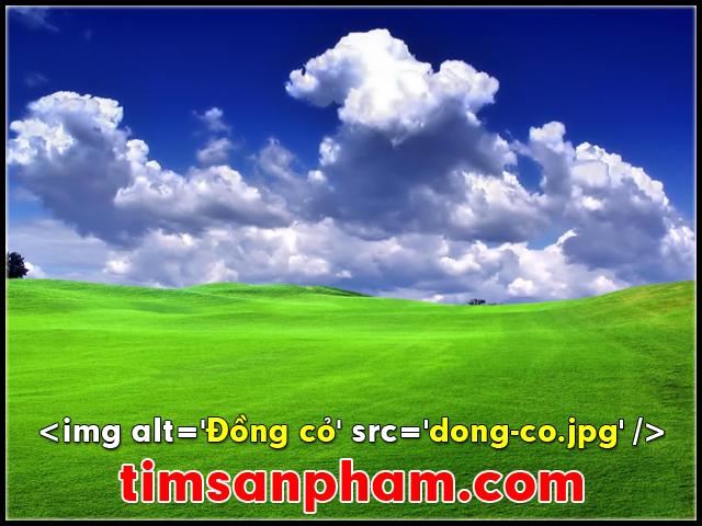 timsanpham-seo-image